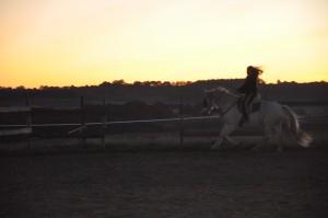 Entraînement des chevaux avec Eya