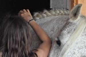 Préparation des chevaux avant les spectacles