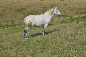 blog homme cheval