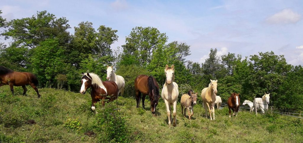 Le troupeau